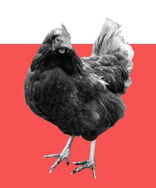 heritage_chicken_opener