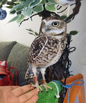 owl opener