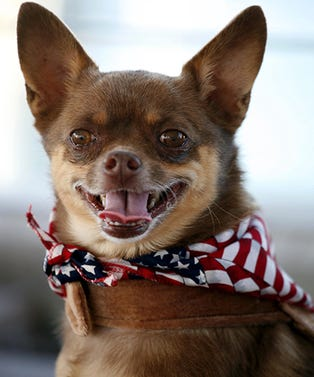dog-4th-opener