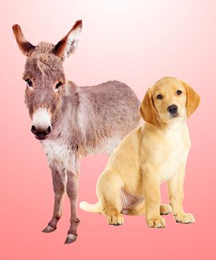 Dodo_Donkey_Dog_Opener
