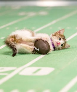 kittenbowlmain