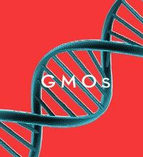 GMO_Opener