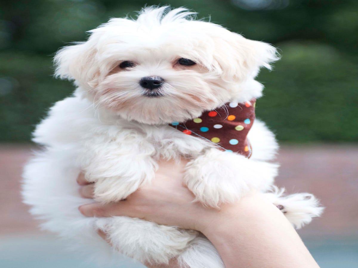 How My Dog Saved My Life