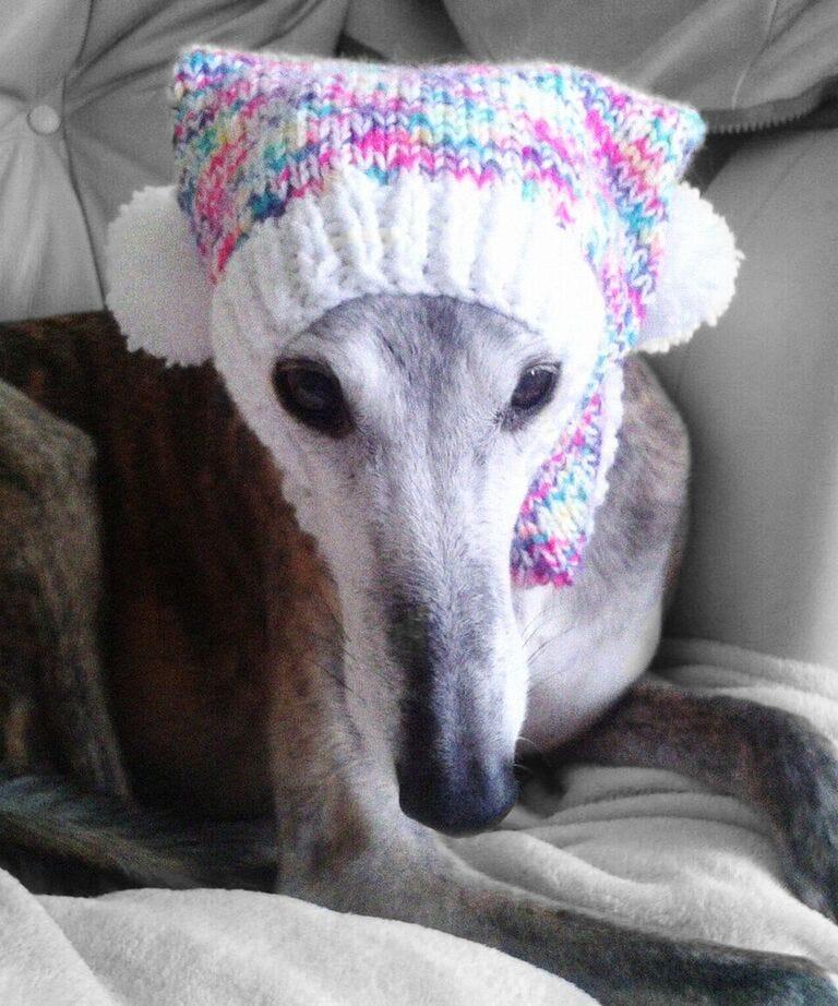 GreyhoundOpener