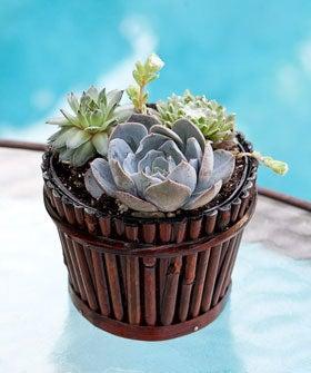 indoorplants-op