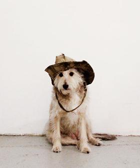 dogdogOP