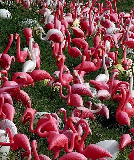 flamingoopener