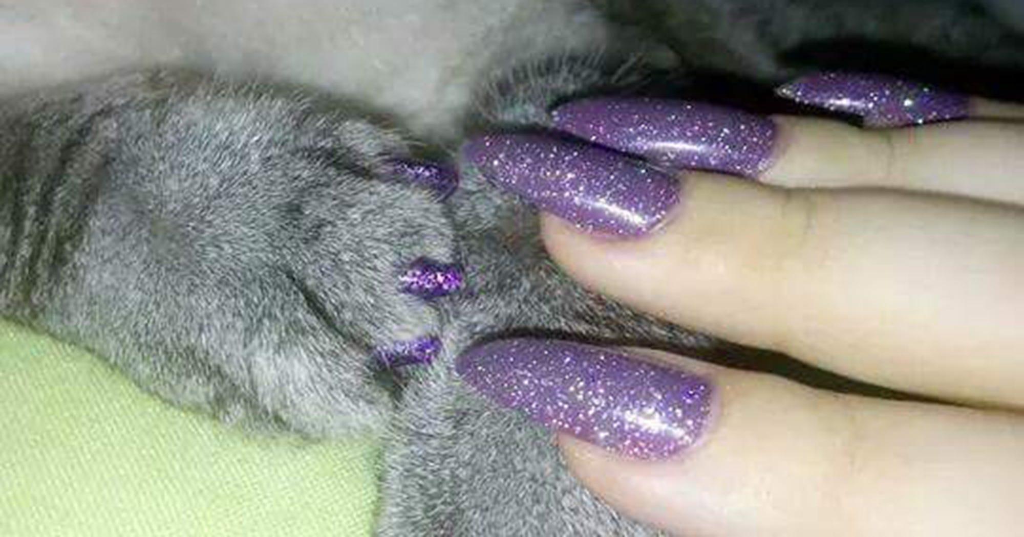 Накладные ногти у кошек фото