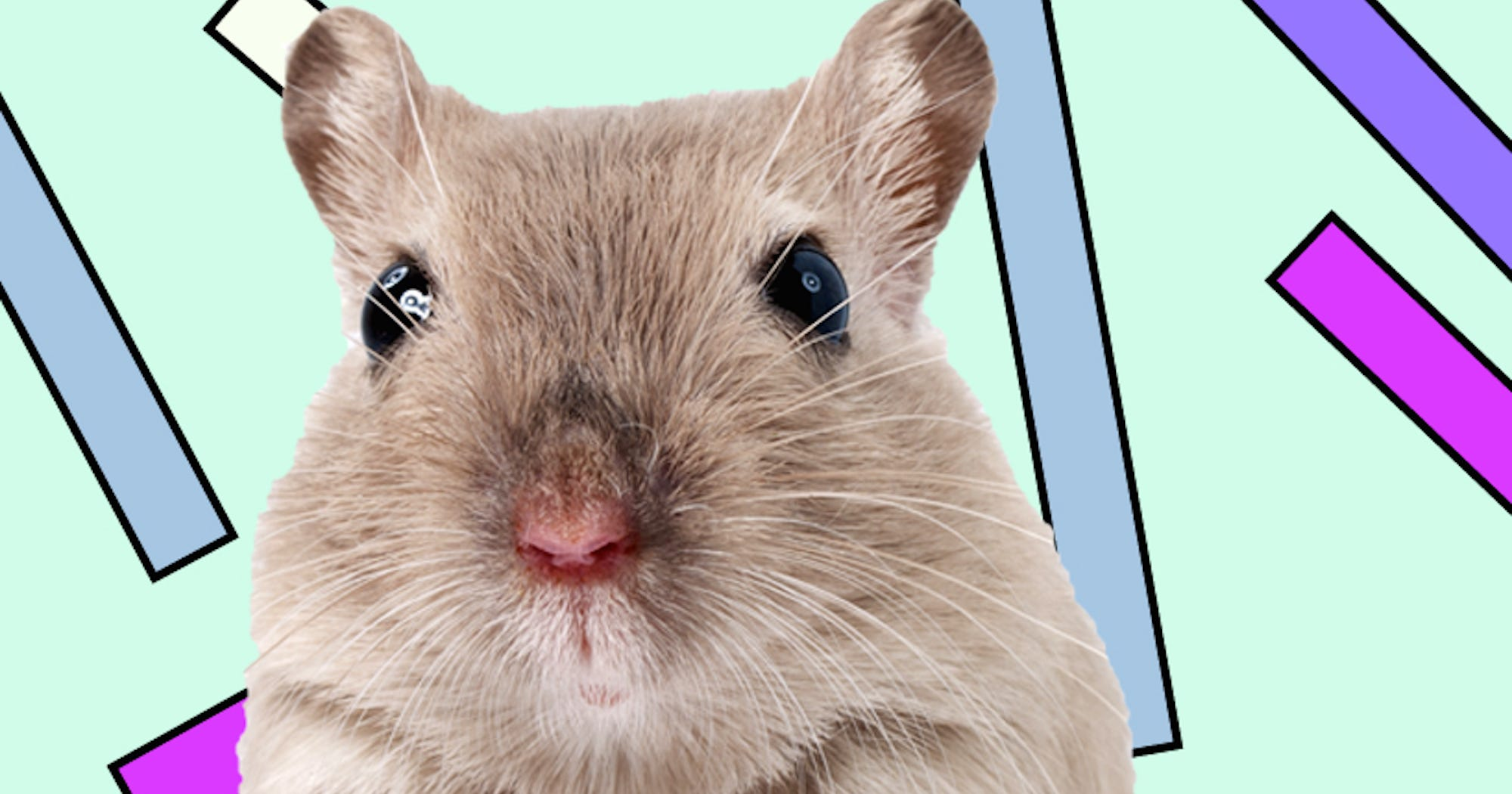 Cute Lab Rats Tickling Brain Experiment