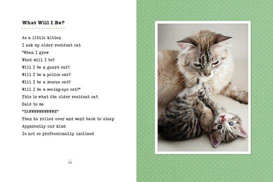 Cat Poetry Knead Mommy Francesco Marciuliano