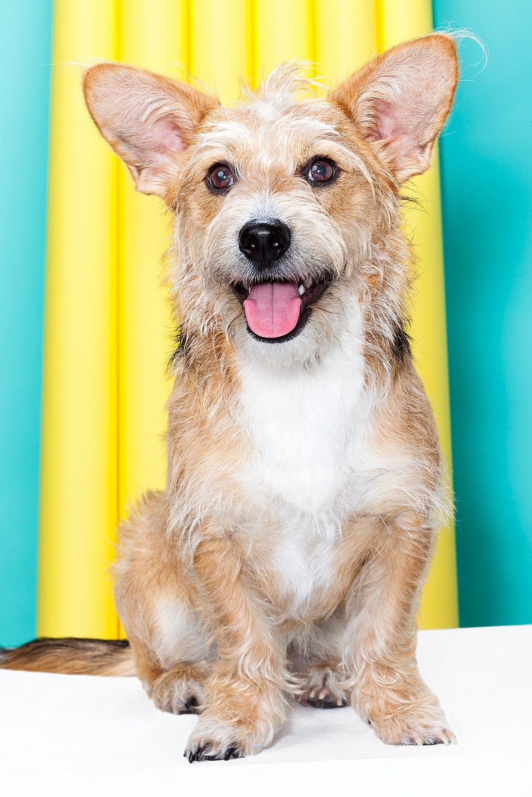 Cute Dog Pictures Pet Adoption Rescue Animals