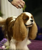 28 Westminster Dogs Who Did The Darn Thing Last Night
