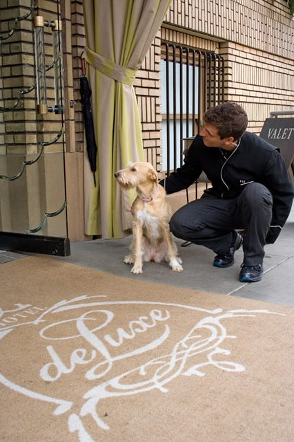 Refinery Hotel Dog Friendly