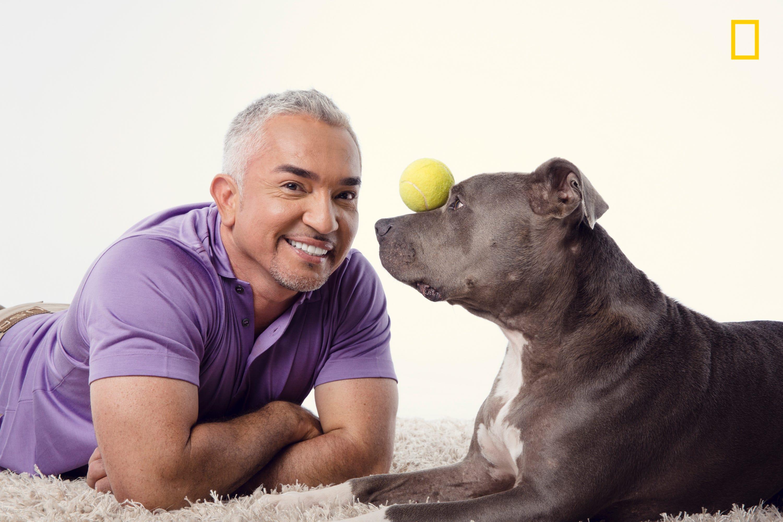 Is Cesar Dog Food By Cesar Millan