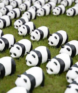 pandasopener