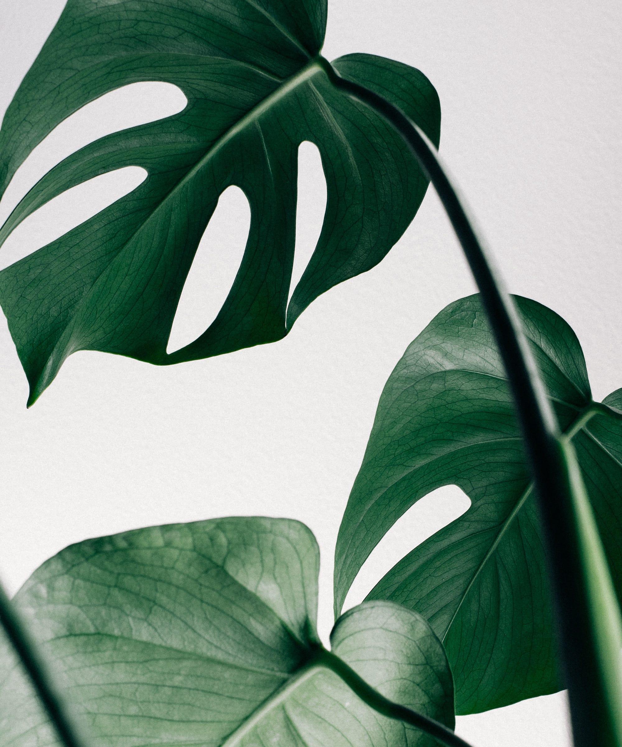 Die 7 besten pflegeleichte Zimmerpflanzen !