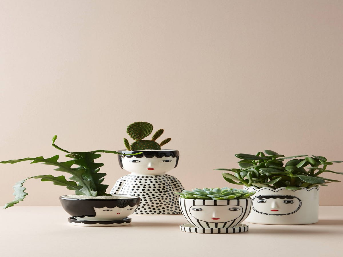 A Plant Queen s Guide To Green Gifts That Don t Succulent