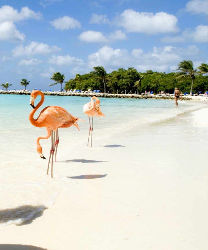 There S A Caribbean Beach Where You Can Chillax With Flamingos Our Travel Dreams Have Come True