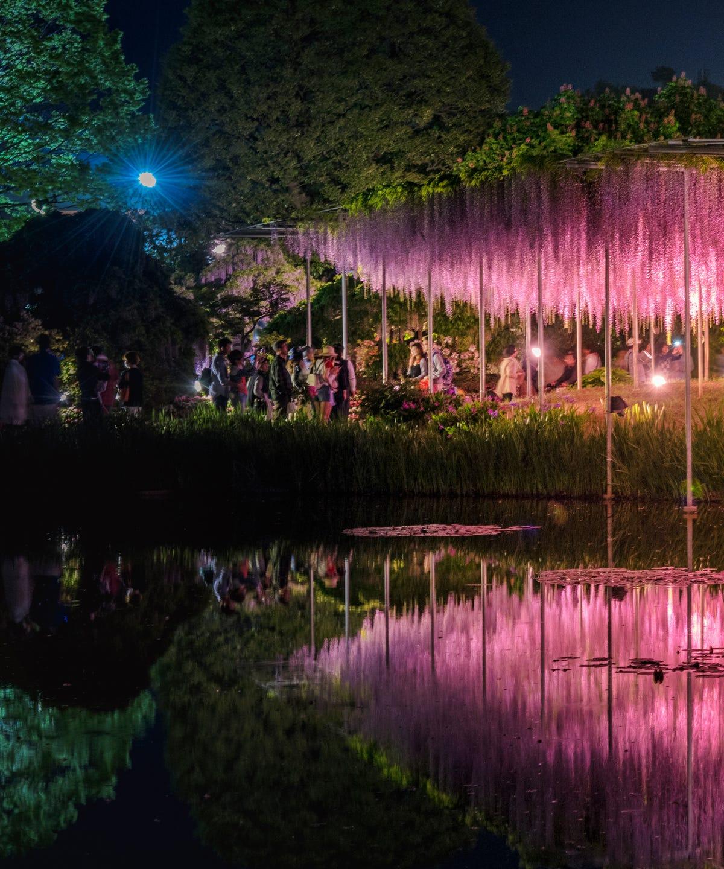 b5c25e809d1a Japan's Wisteria Gardens Are A Technicolor Must-See