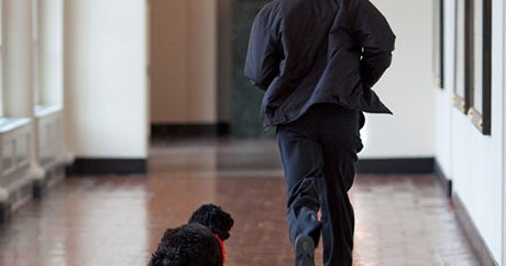 Happy B-Day, Mr. President! From Your Adorable BFF, Bo Obama