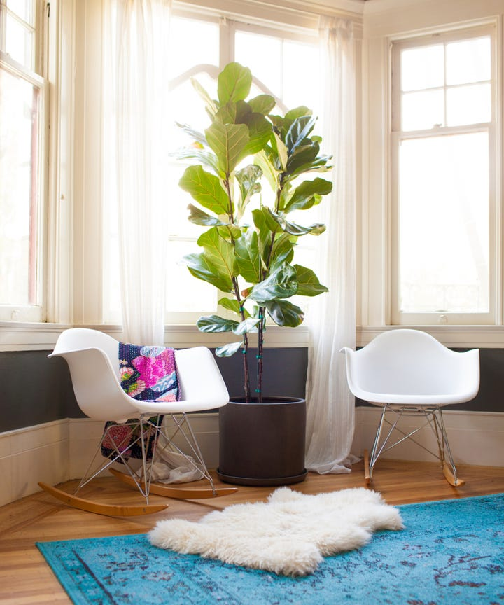 A Guide To The Best House Plants For Small Flats