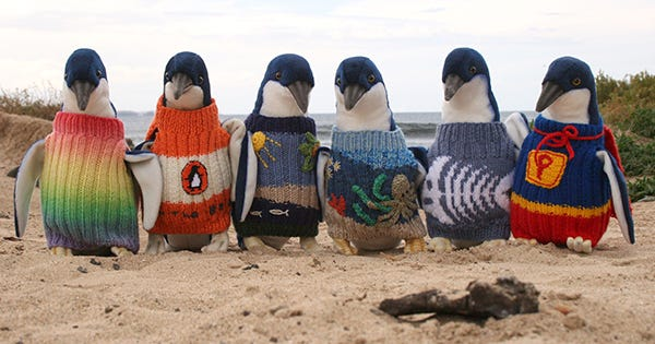 Australia's Oldest Man Knits Sweaters For Penguins