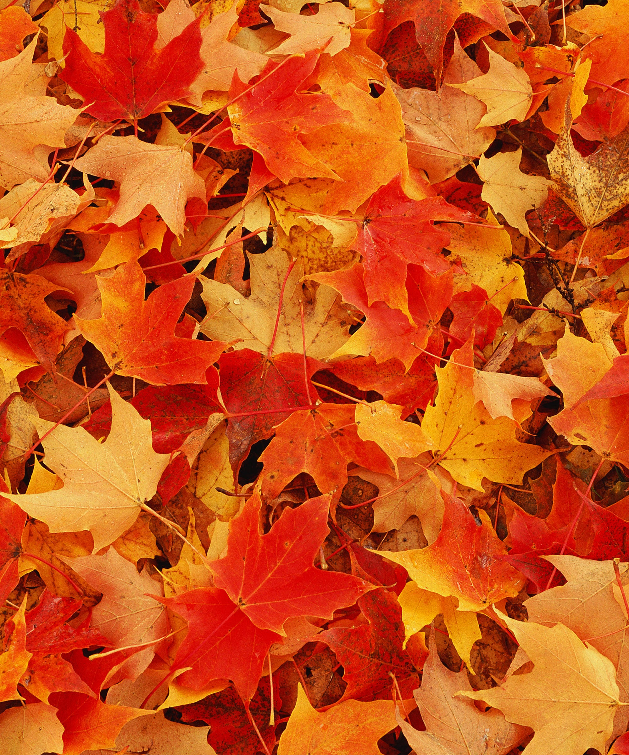 Cash 4 Leaves Sell Fall Foliage For Money New England