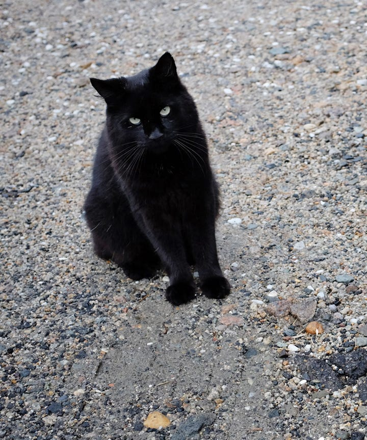black cat appreciation day 2018 history superstitions