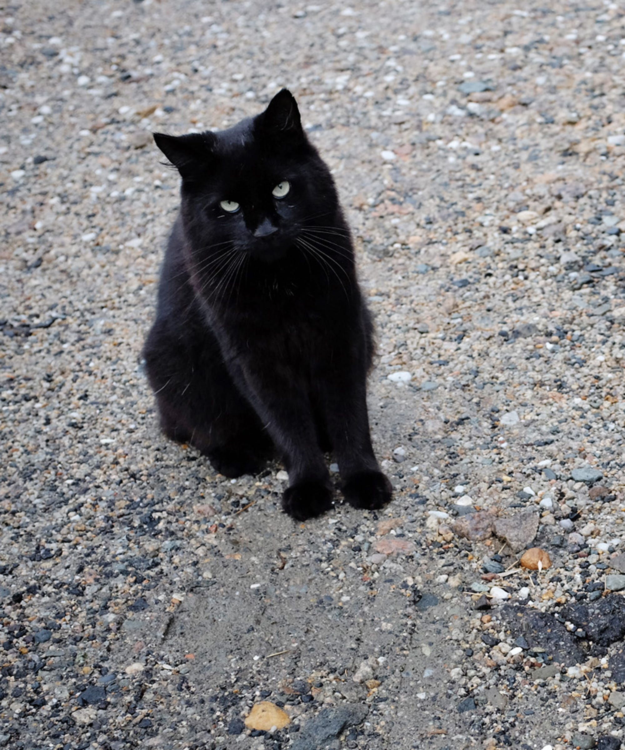 About the black cat, or why you can not believe in superstition