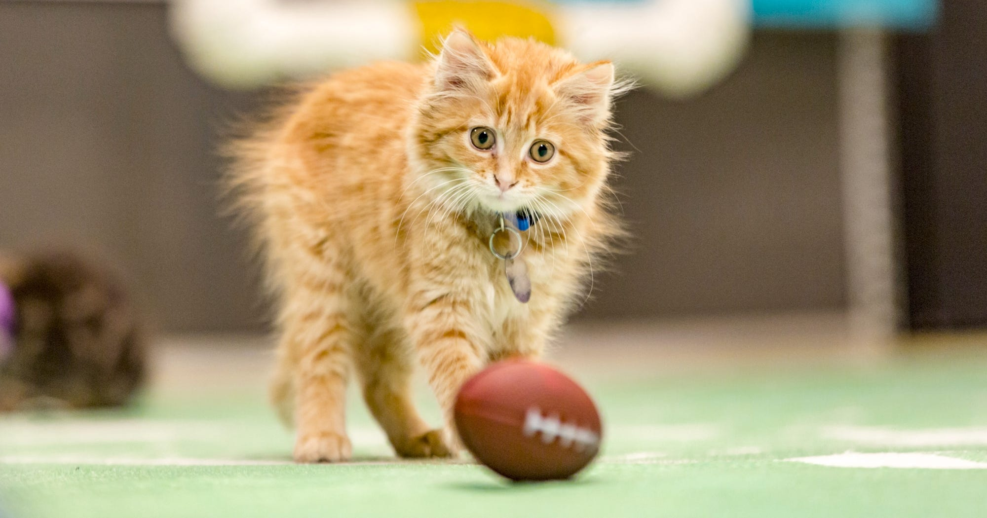 13 Moments From Kitten Bowl III That Are Purrfection