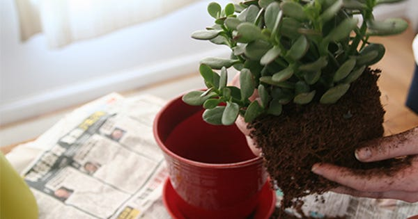 Repotting 101: How To Stop Killing Your House Plants