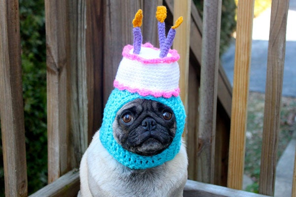 Dogs In Hats - Funny Pug Pictures