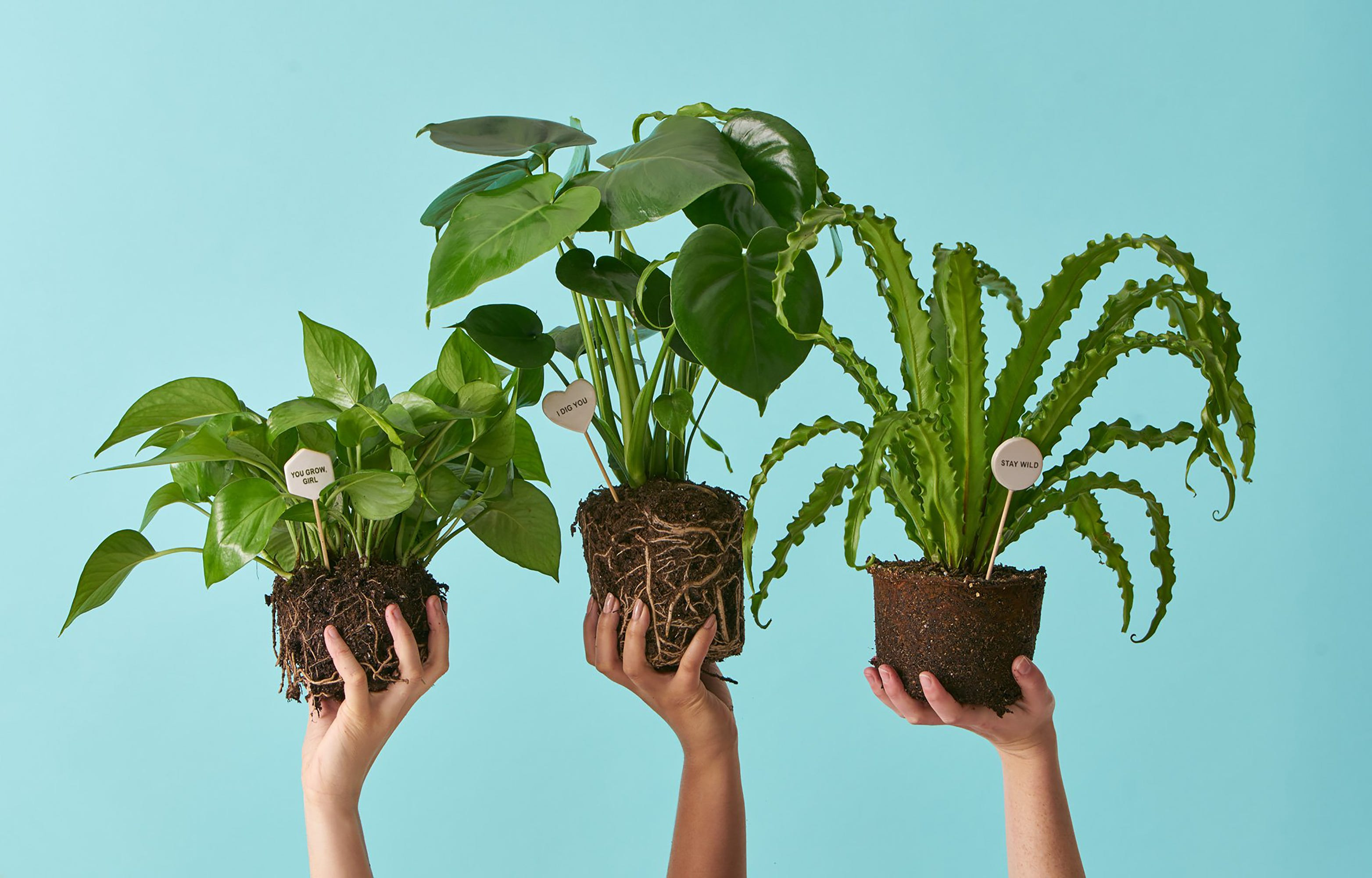 Ing Plants Online Plant S To Order Houseplants