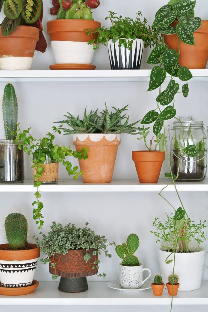 geverfde terracotta pot en planten
