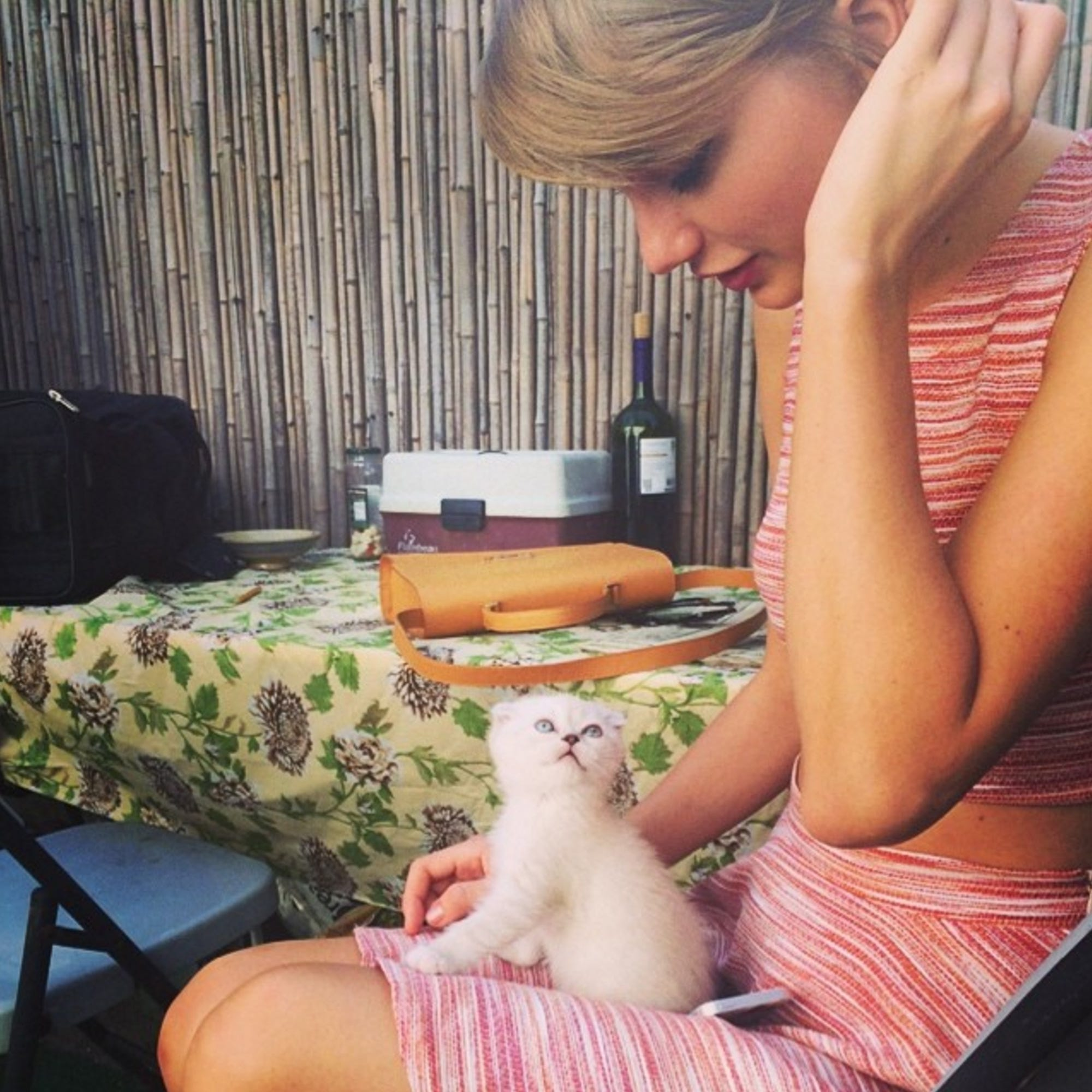 Scottish Fold Breed Cats Taylor Swift Ed Sheeran Pets