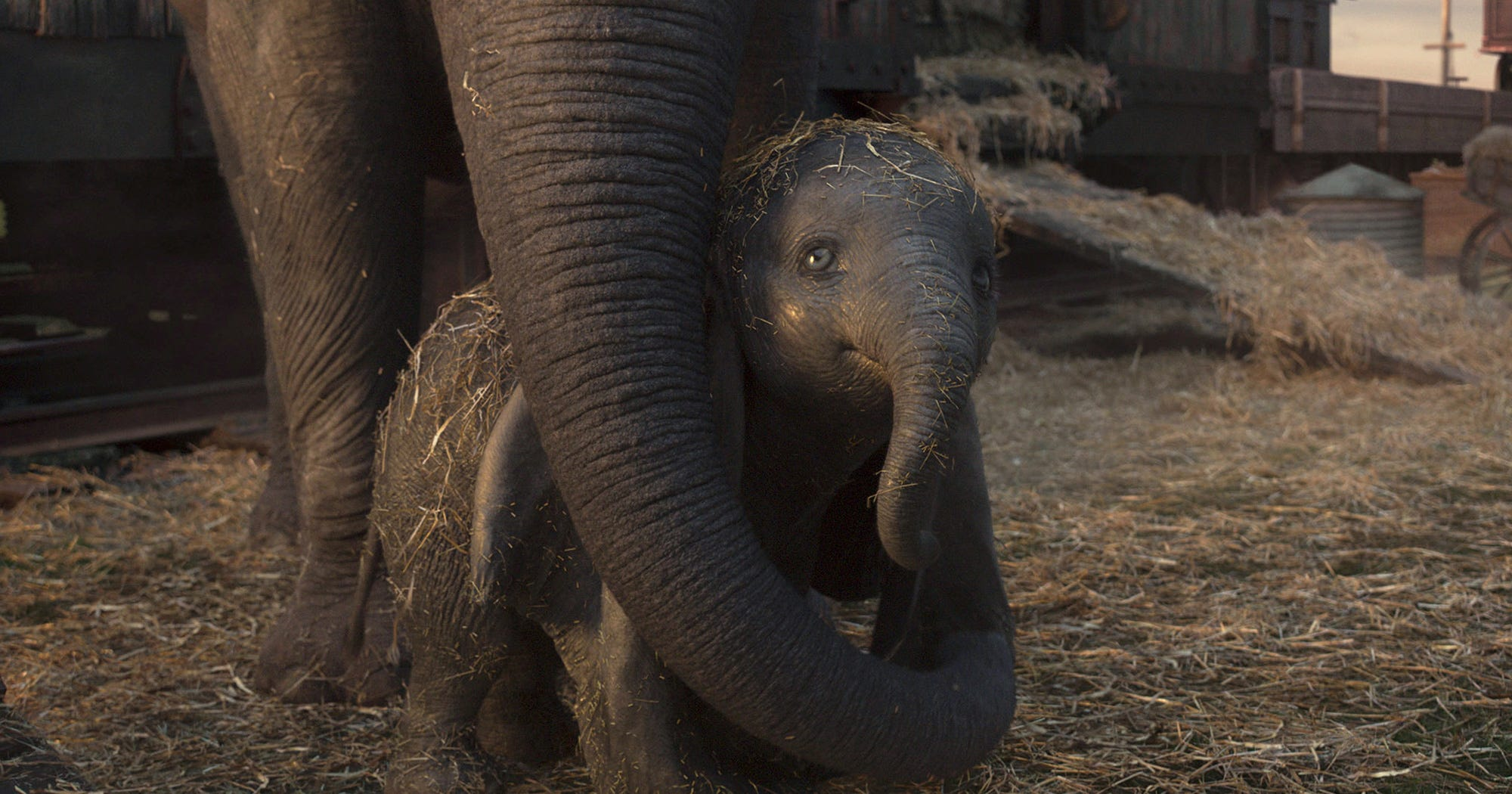 How Accurate Is The Dumbo Version Of A Baby Elephant?