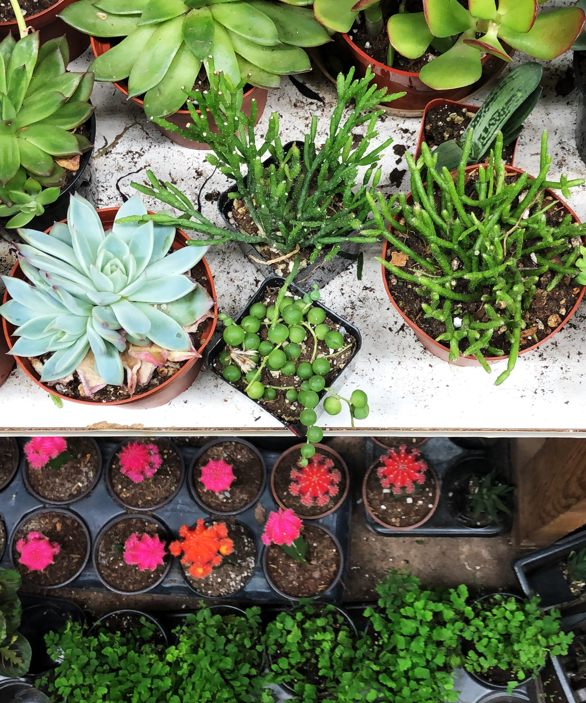 I Created An Indoor Garden In 5 Days — Here's How I Did It